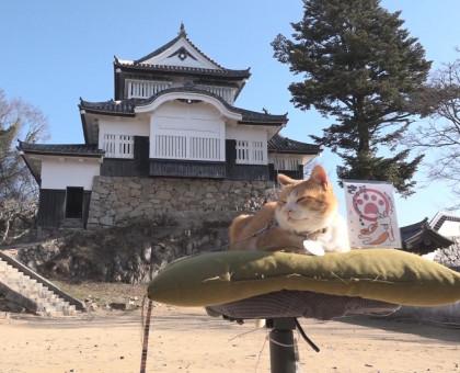"""備中松山城の猫城主 """"さんじゅーろー""""御城印 お目見え"""