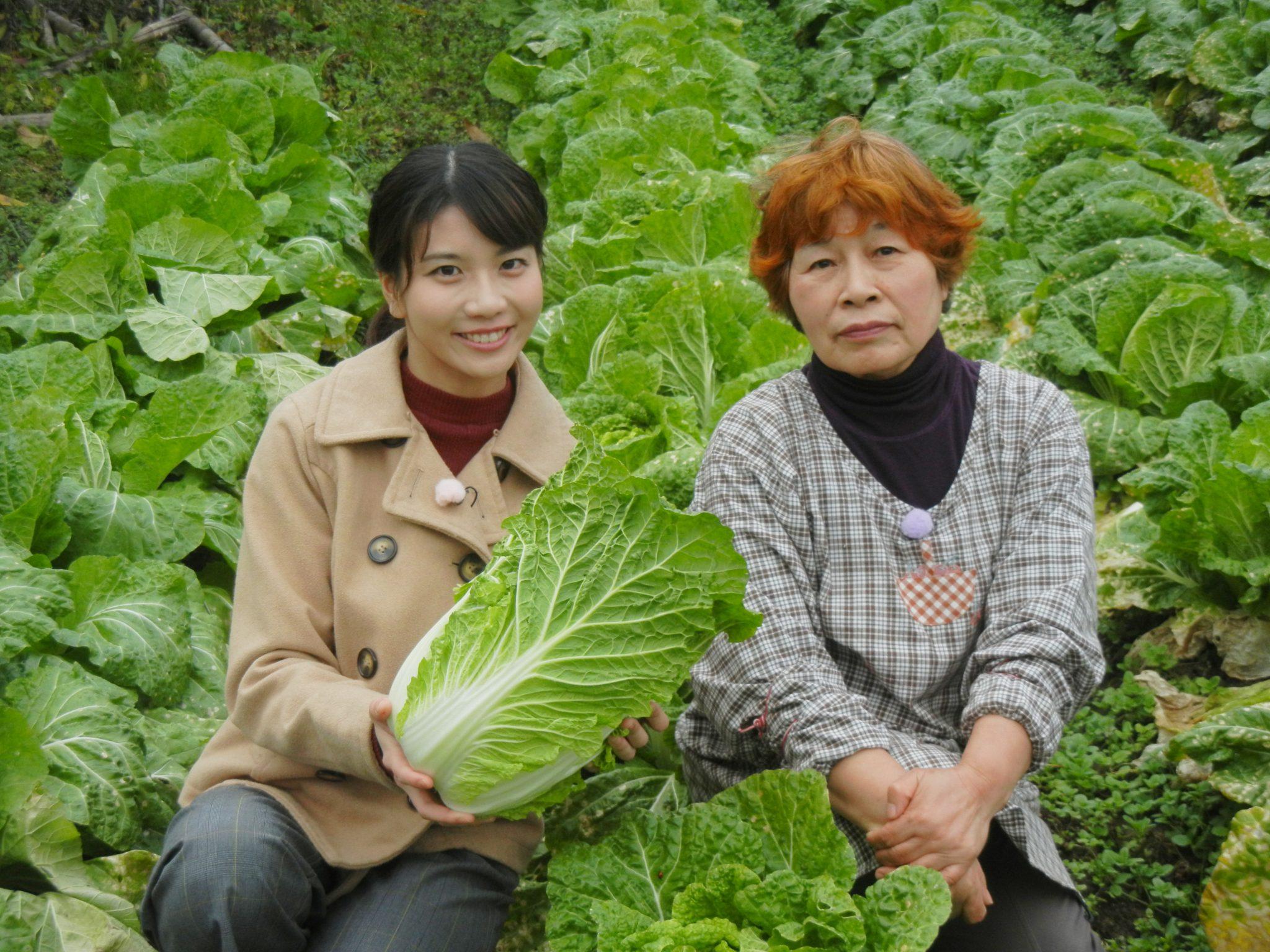 「はじめおばあちゃんの白菜の煮物」