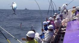 世界が注目するニッポンのスゴ腕漁師!!謎のサンゴ漁に山口もえ仰天!