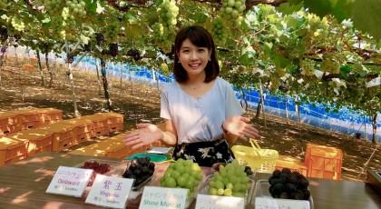 夏休みのお出掛けスポット☆ 食べて学んでブドウ狩り♪